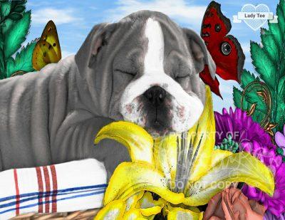 Doggie Fun - Tracey Robinson