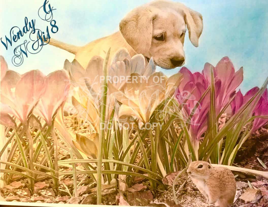 Doggy Fun - Wendy Gooch
