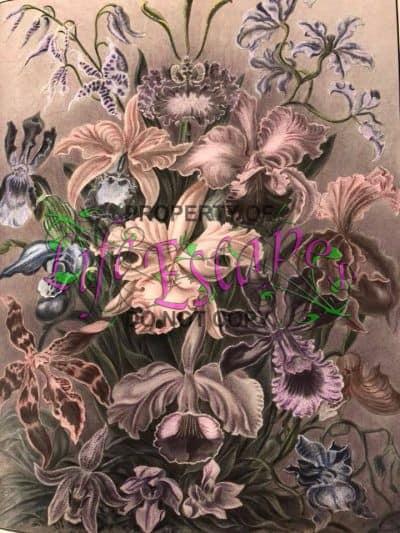 Floral Fun - Lisa Juen-Deckard