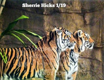 Sherrie Hicks
