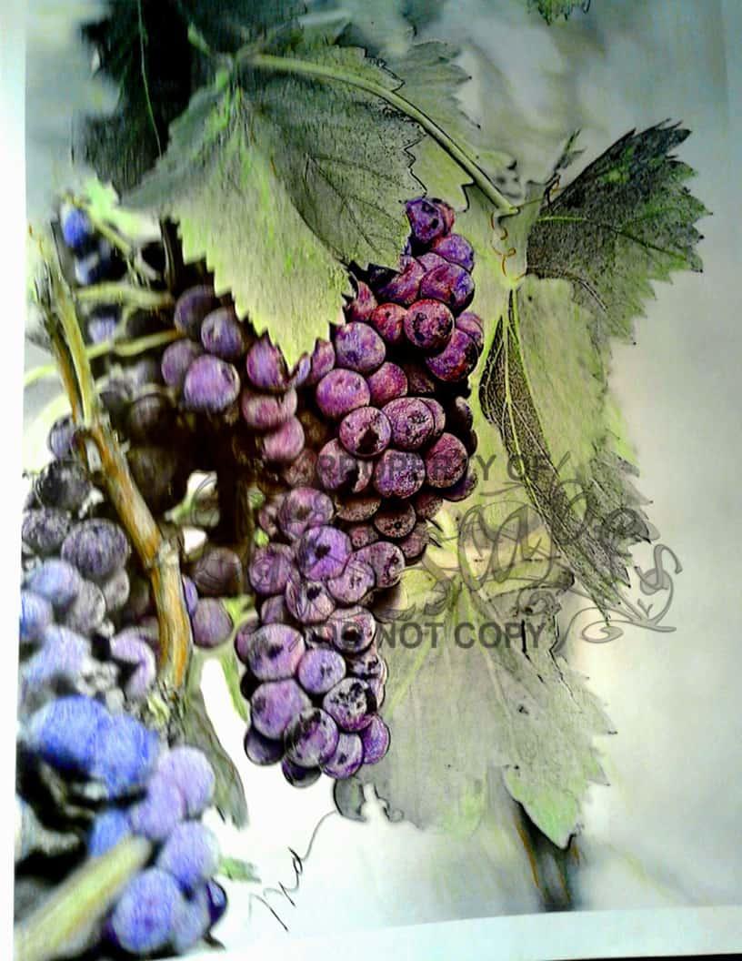 Wine Lovers - Mary Brigette Poillucci DiPhillipo2