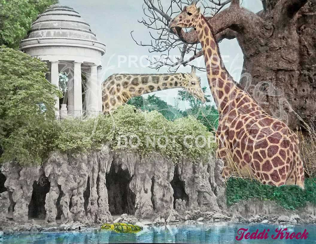 animals in nature - Teddi Krock